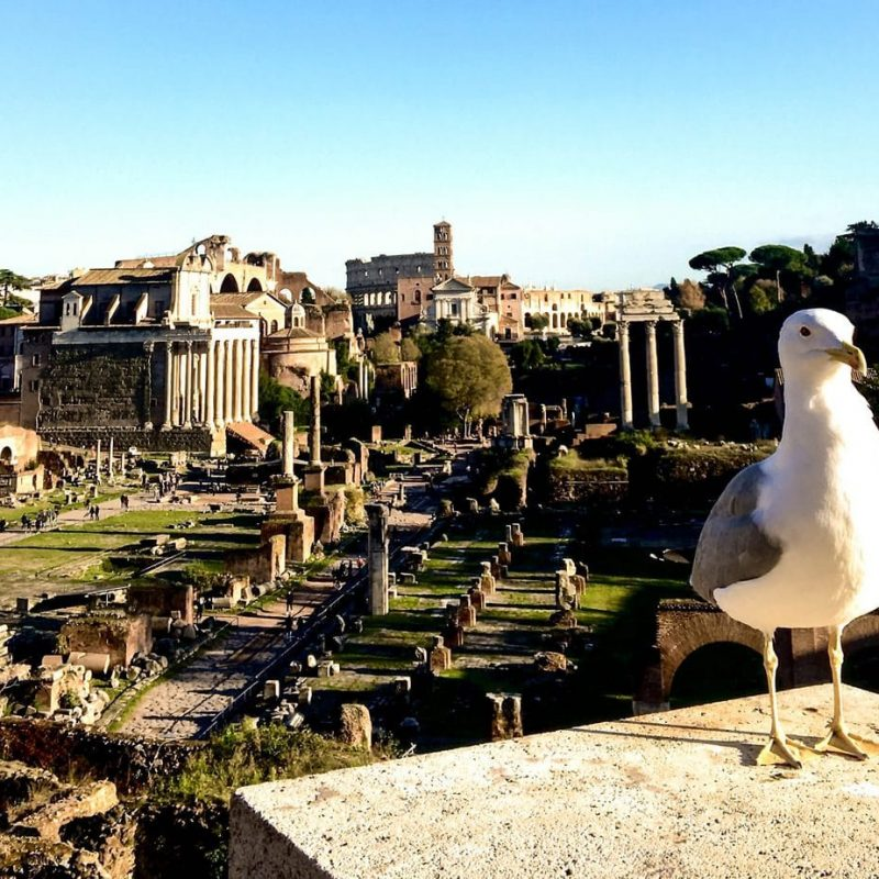16_Rome_Colosseum_Tour